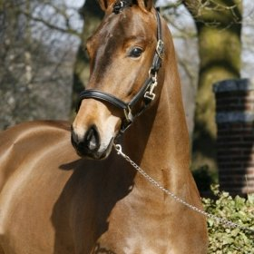 sold-to-france-don-larino-x-rouletto-holst