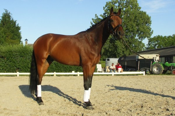 sold-to-the-netherlands-florencio-x-sandro-hit