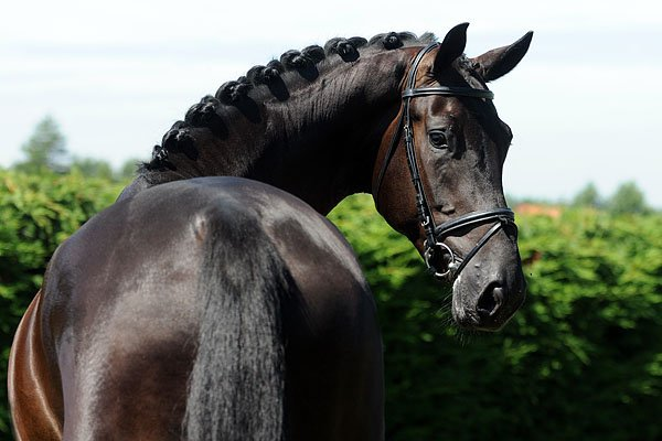 sold-to-the-netherlands-lord-leatherdale-x-rubiquil