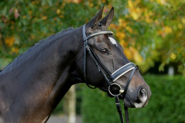 sold-to-england-obelisk-x-voltaire