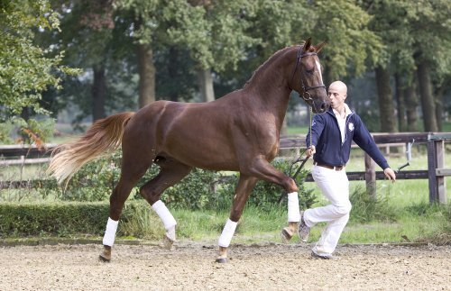 sold-to-the-netherlands-san-dior-x-argus