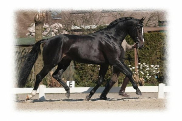 sold-to-the-usa-san-remo-x-julius-marinier
