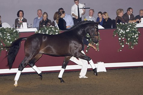 sold-to-the-netherlands-sandreo-x-gribali