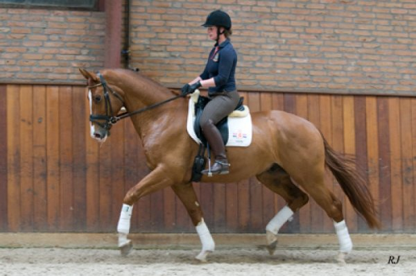 sold-to-the-netherlands-tango-x-el-corona