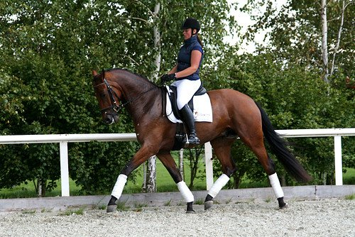 sold-to-the-netherlands-valeron-x-uniform