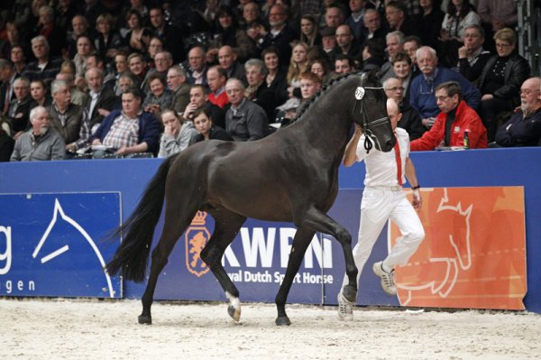 sold-to-the-usa-vivaldi-x-balzflug