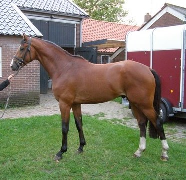 sold-to-the-netherlands-wonderboy-x-now-or-never